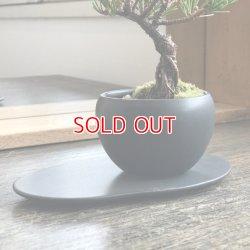 画像4: 実生五葉松の情景盆栽 【デザイン鉢・黒 楕円皿】☆1点物☆