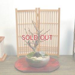画像2: 紅梅(大盃)の情景盆栽 【瀬戸焼鉢】☆1点物☆ 濃紅花一重